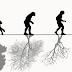 O que é evolução?