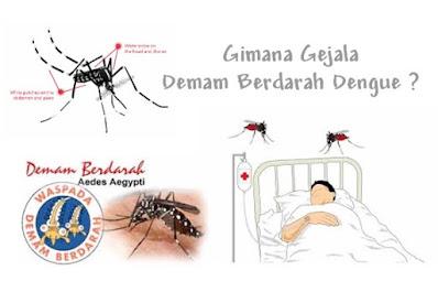 Tanda - tanda awal gejala Demam berdarah Dengue