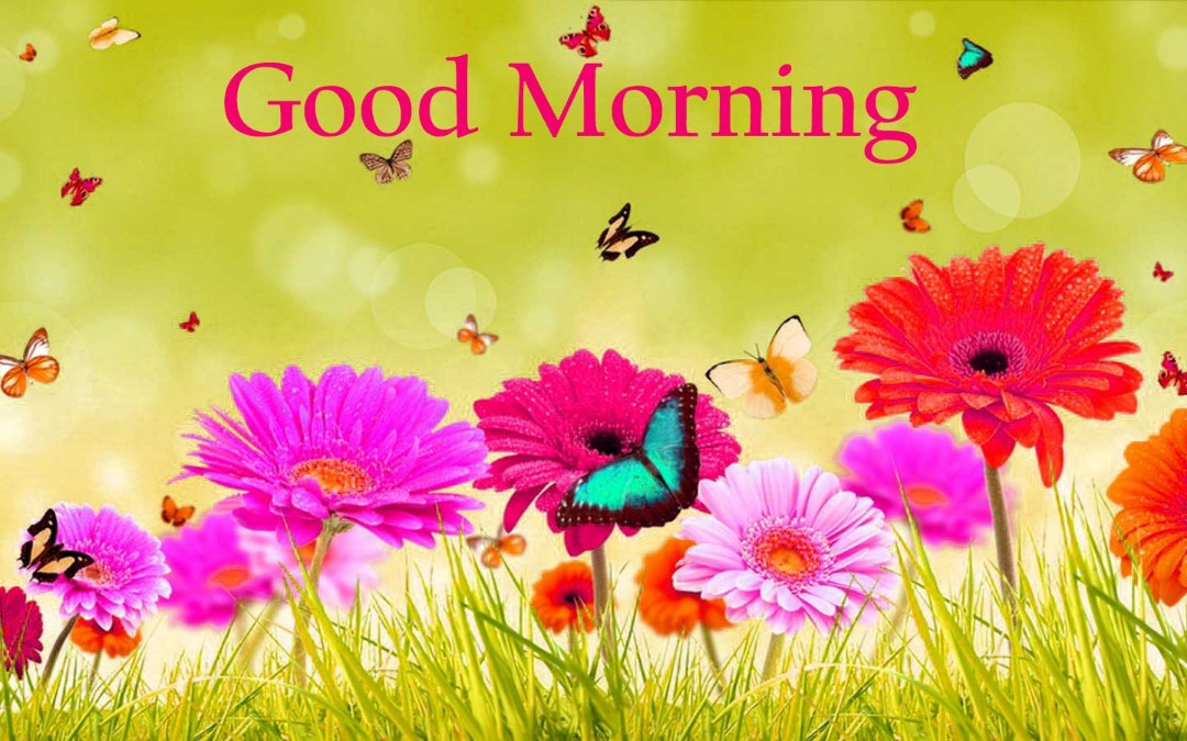 Romantic HD Good Morning Flowers Wallpapers