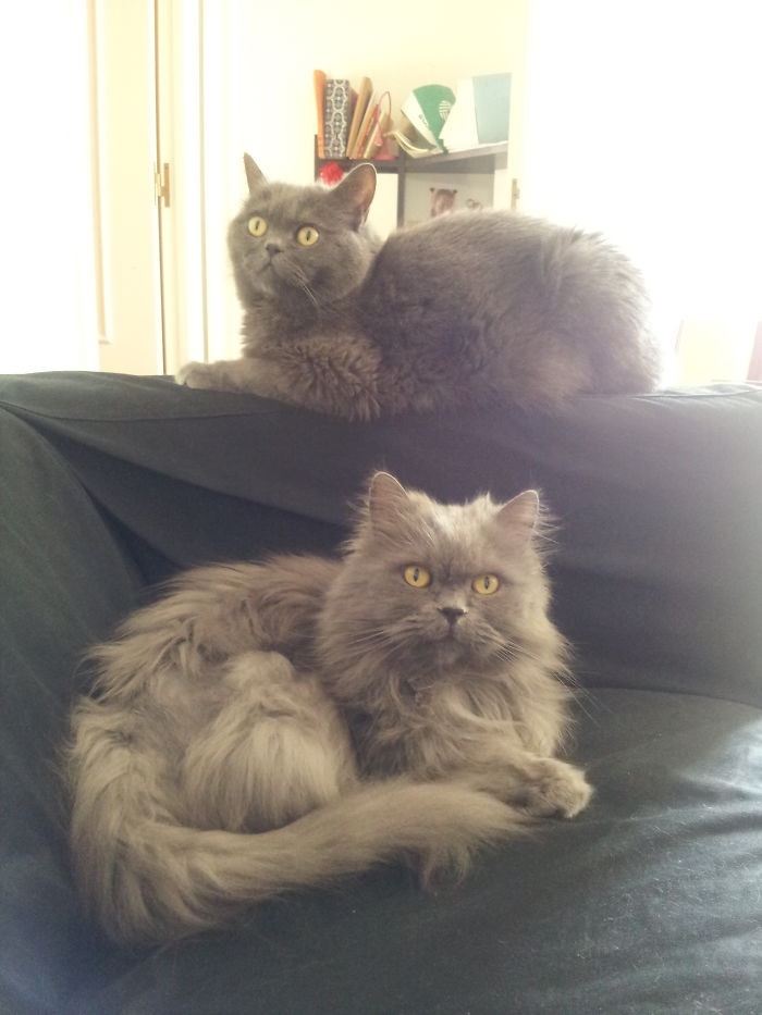 50 Heart-Warming Photos of Animals Growing Up Together - Murphy & Toshio, Grey Lovely Brodas.