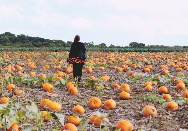 Pumpkin patch Hampshire