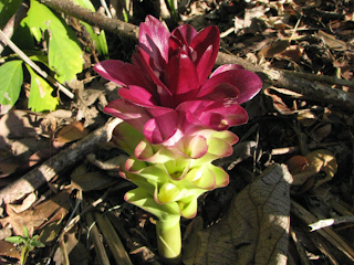 flowers from the ground in Costa Rica