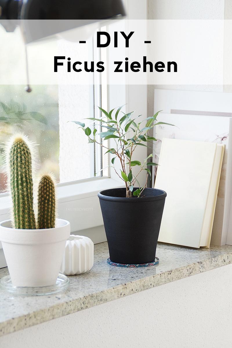 DIY: Birkenfeige/ Ficus Natasja aus Zweig ziehen - Zimmerpflanze Dekoration pflegeleicht