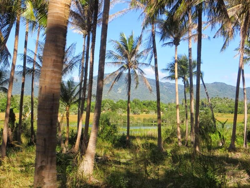 Пальмы, озеро, горы Самуи