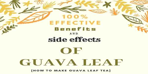 benefits-and-side-effects-of-Guava-Leaf