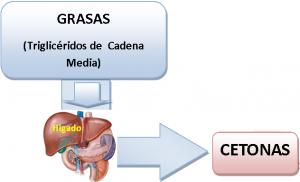 """<img src=""""para-qué-sirven-las-cetonas.jpg"""" alt=""""son moléculas intermedias que el cuerpo usa para producir glucosa"""">"""
