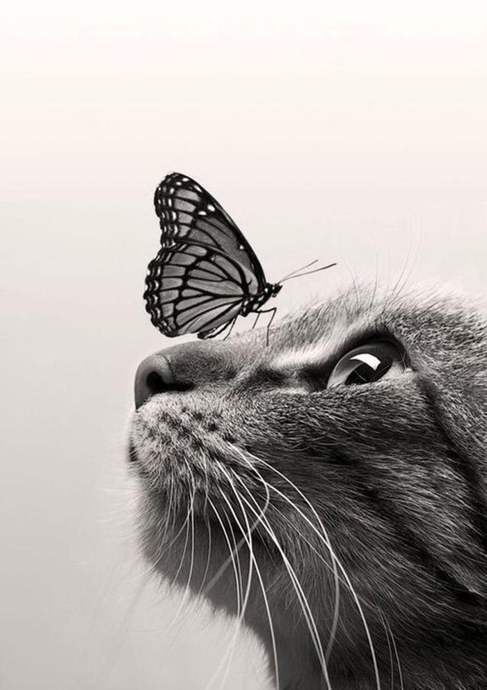 mongrelpet cani gatti meticci