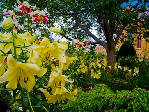 Allen Centennial Gardens - UW Madison