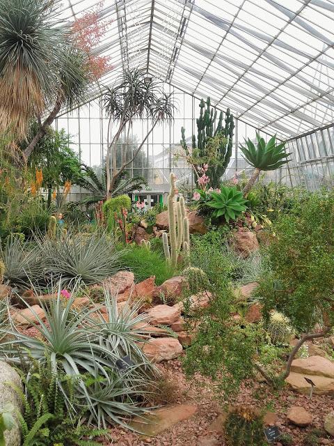 cactus y suculentas en el jardin botanico de edimburgo