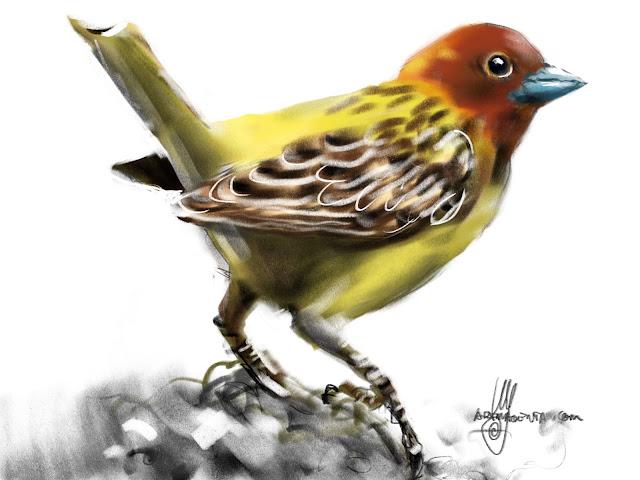 Red-headed Bunting bird painting by Ulf Artmagenta