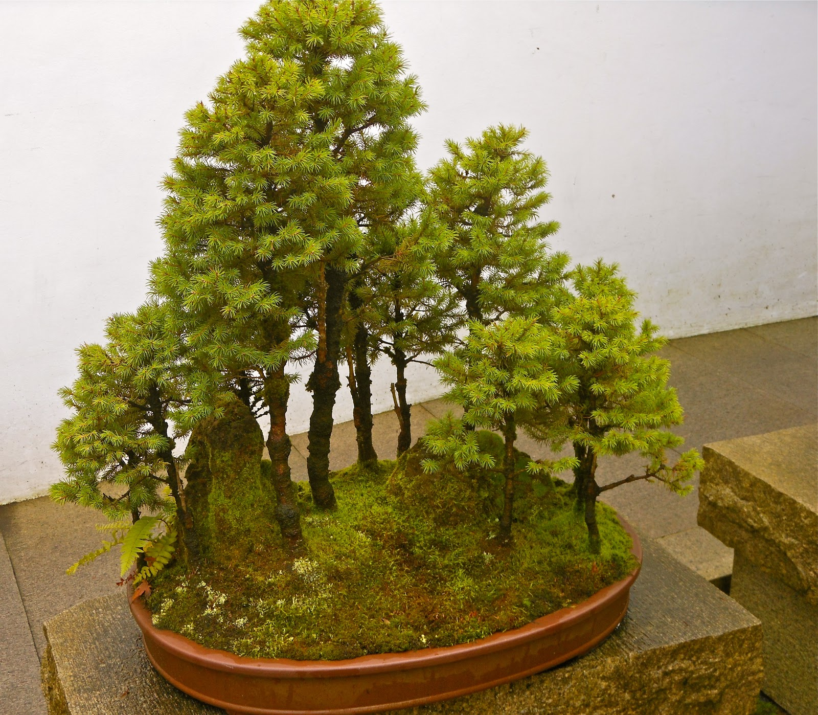 Bonsai Tree 20 Astonishing Bonsai Tree Portland Oregon