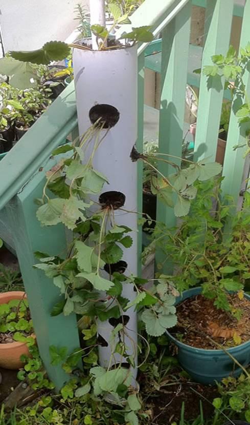 Senda rural cultivos verticales con tubos de pvc for Cultivos verticales definicion