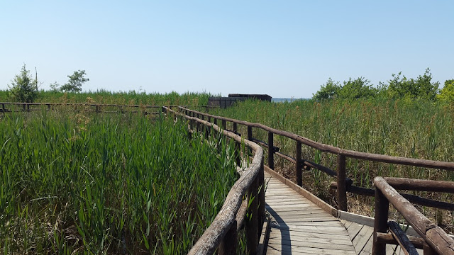 massaciuccoli lake oasis