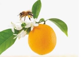Πωλείται μέλι πορτοκαλιάς στην Άρτα
