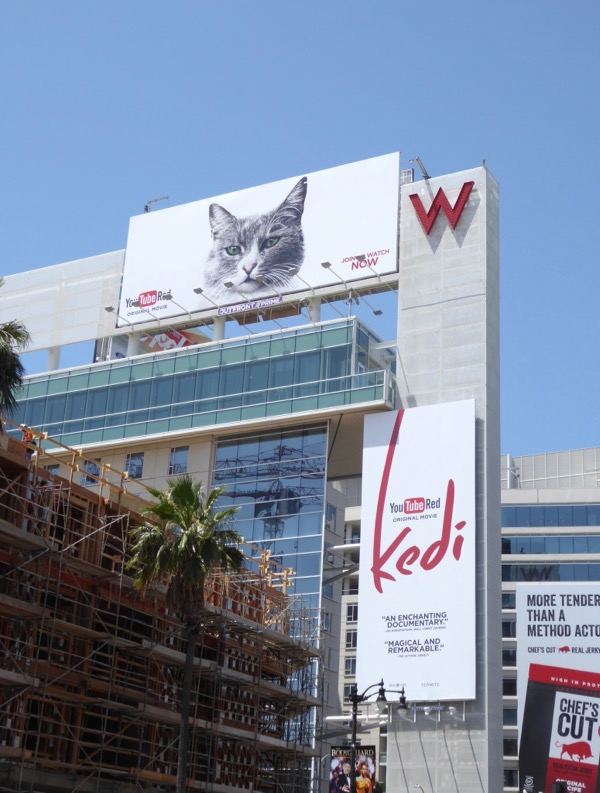 Kedi YouTube Red cat billboard