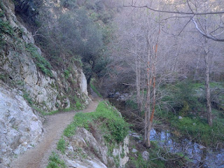 Riparian section along Fish Canyon Trail, Angeles National Forest