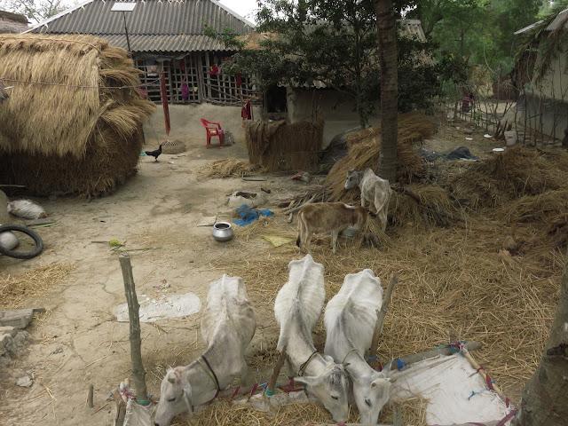 Patghara Village Samshernagar Sundarban