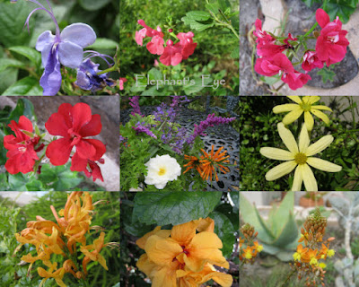 April flowers (South African except Salvia, Mexican sage, rose and hibiscus were in the garden)