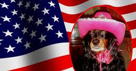 Molly The Wally. The Little Dog With A Blog!: Hello Everyone and Happy 4th of July.