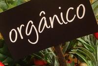 Curso online de papinhas orgânicas