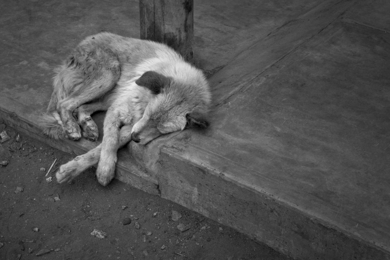 Saiba qual é o país onde nenhum cachorro é abandonado