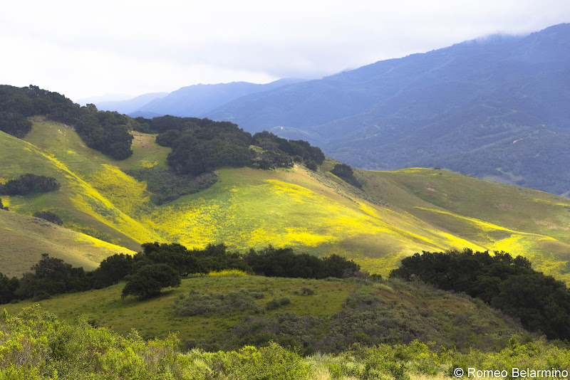 Highway 1 Hills Covered in Mustard Buellton California Weekend Getaway