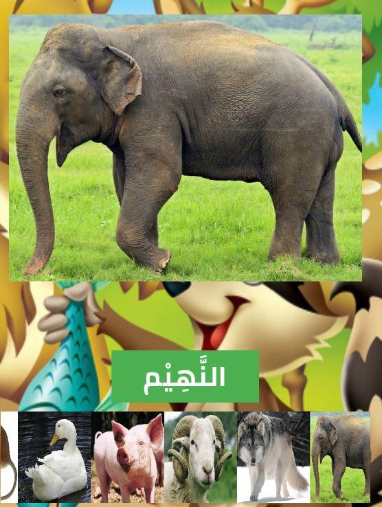 تطبيق أسماء و أصوات الحيوانات بالصوت و الصورة ....... 5