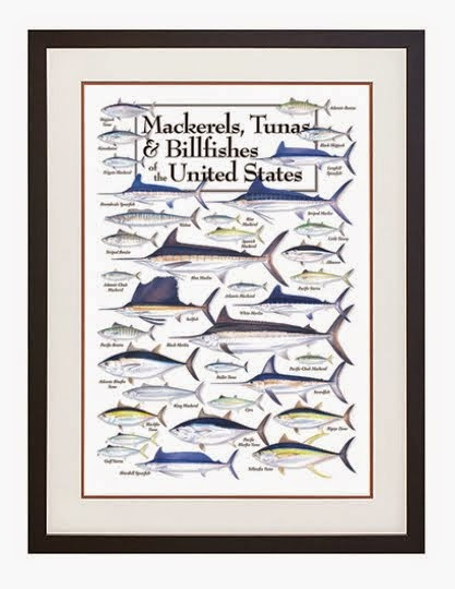 Mackerels, Tunas and Billfishes of the United States