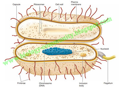 ciri yang membedakan archaebacteria dan eubacteria adalah