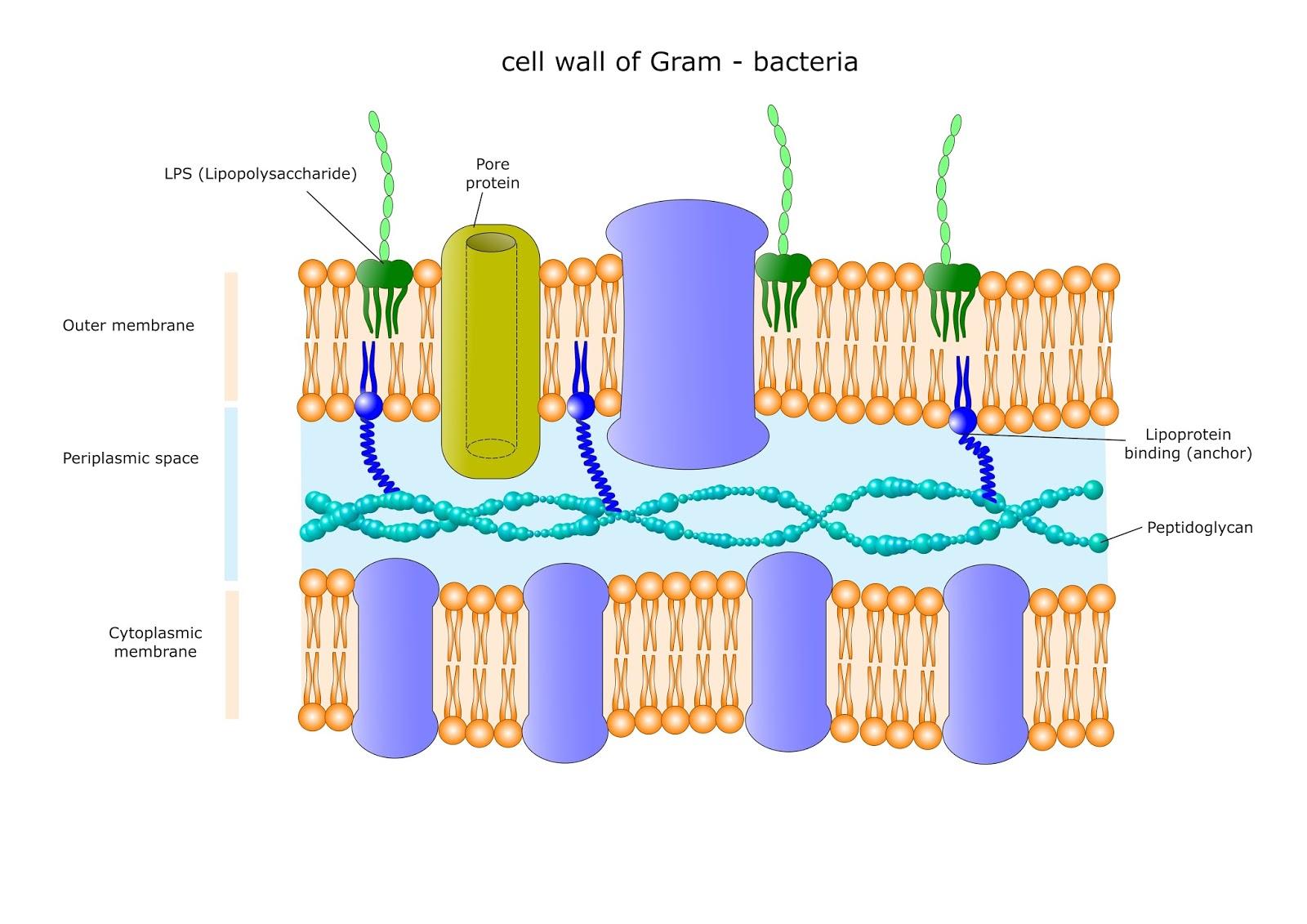 Membrane Transport   PRINCIPLES OF MEDICAL SCIENCE