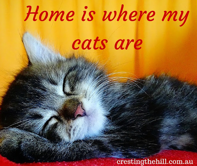 home is where my cats are - finding out I'm a cat person