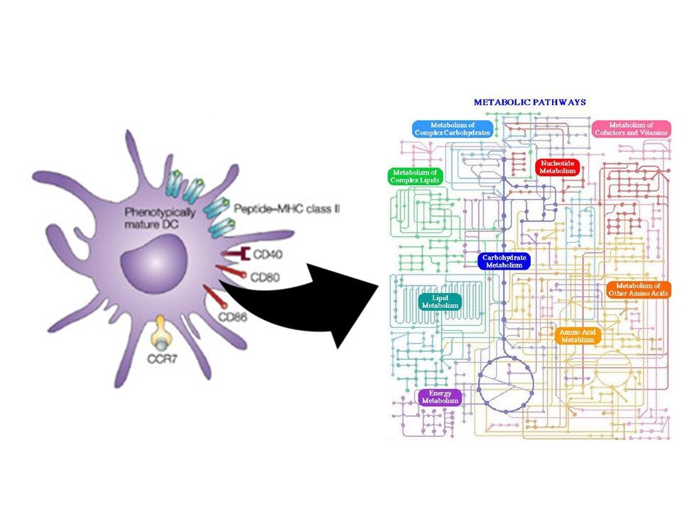 SBlogI: Qual a relação entre metabolismo e a resposta..