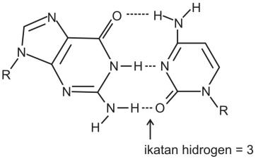 ikatan hidrogen molekul guanin
