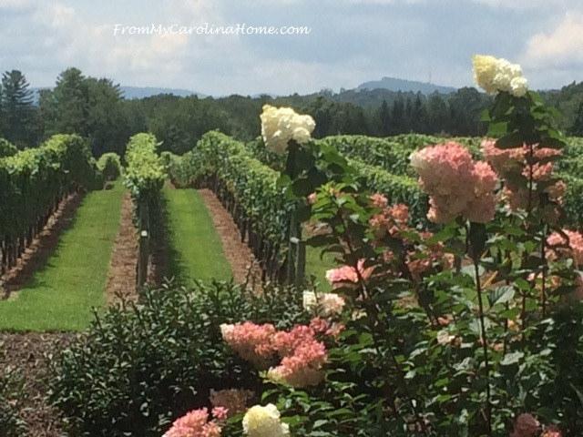 North Carolina vineyard - From My Country Home blog