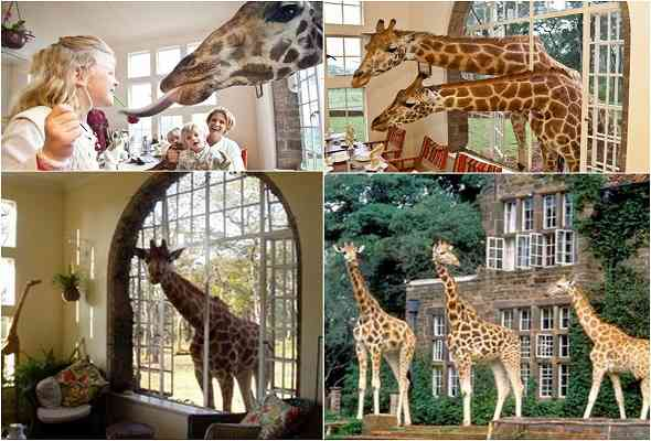 giraffe-manor-قصر-الزراف