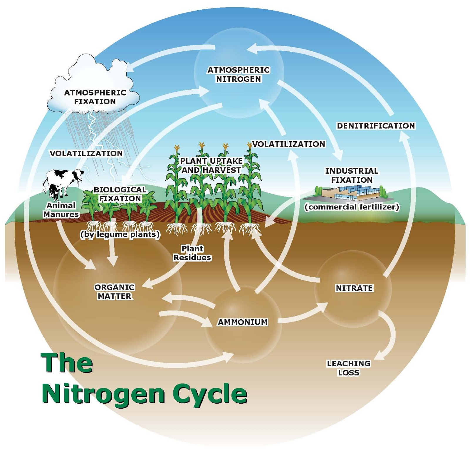 Managing Plant Nutrients  Nitrogen Sources For Organic