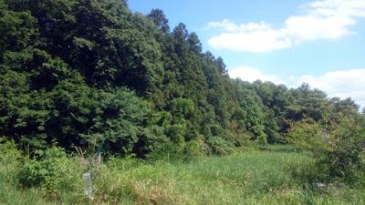 畑から見た谷津と林