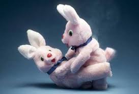 Stuffed bunnies mating