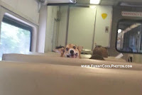 Funny Photos Captured in Local Trains
