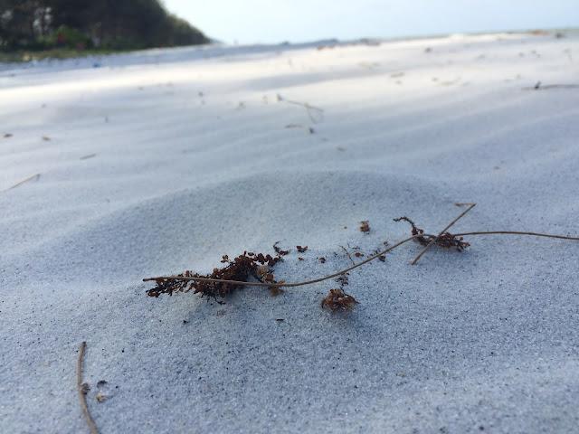 Pasir Putih Pantai Tambak - Belitung Timur