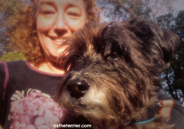 Oz the Terrier is his mom's funny Valentine