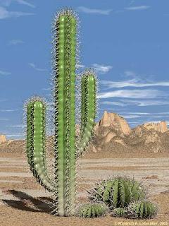 Ciri Khusus Kaktus : khusus, kaktus, Khusus, Makhluk, Hidup, Tumbuhan, Pintar, Biologi