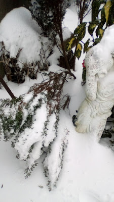 Look after plants in snow Green Fingered Blog