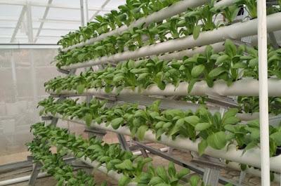 Hydroponics Plants sealed