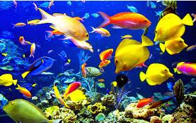 jenis Ikan Hias Air Tawar Yang Bisa Dicampur Pada Satu Akuarium