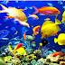 Ikan Hias Air Tawar Yang Bisa Dicampur Pada Satu Akuarium