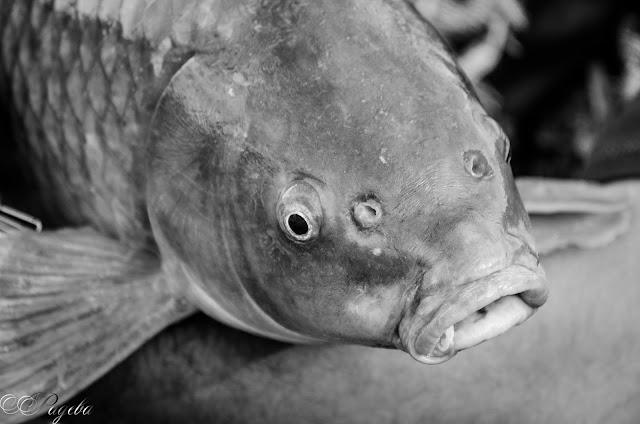 Окото-на-рибата-Fish-eye
