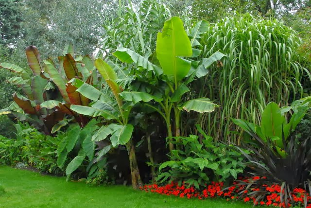 Border containing exotic cold hardy plants
