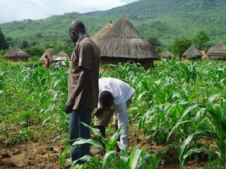 Maize Farmers promised Buhari 5m Votes