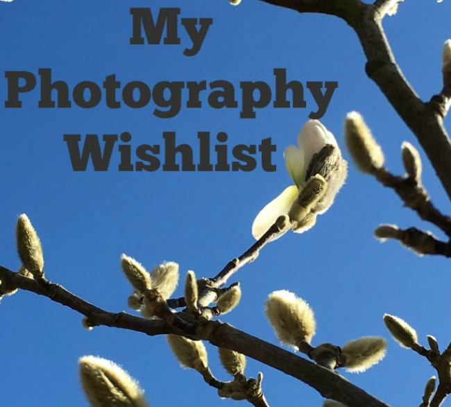 My-photography-wish-list-text-over-image-of-magnolia-buds